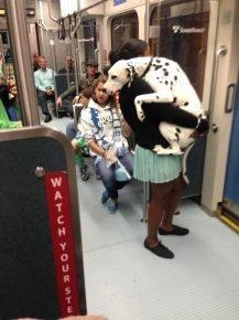 Собака впервые едет в метро