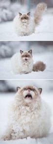 Кошка впервые видит снег