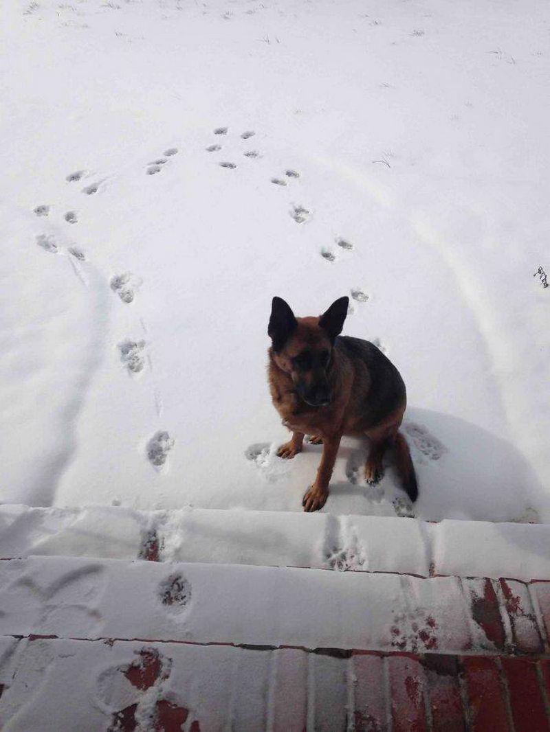 Собака впервые вышла на снег
