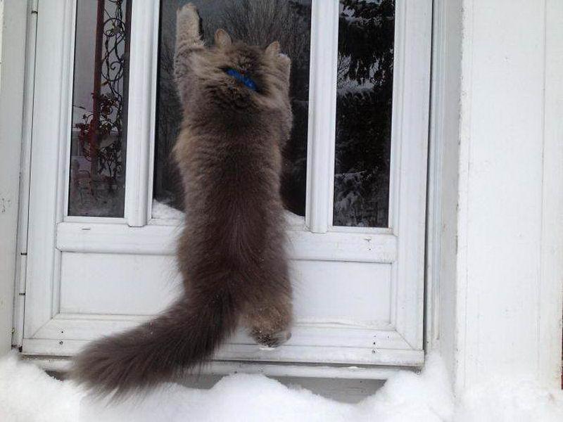 Кот просится в дом, увидев снег