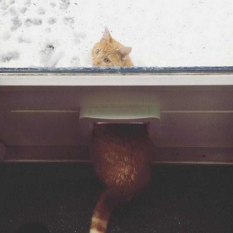 Кот впервые вышел на снег