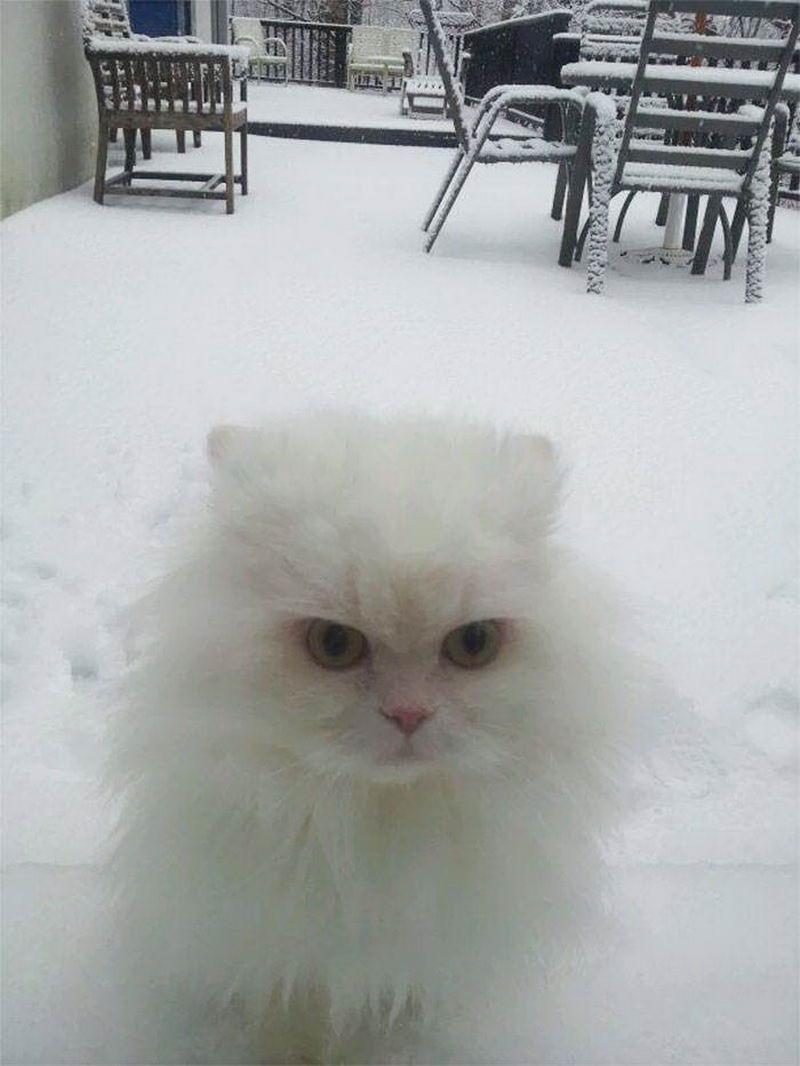 Кот увидел снег впервые