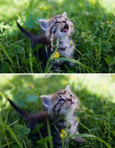 Котёнок впервые видит солнце