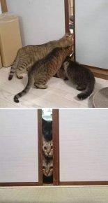 Кошки впервые видят пылесос