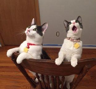 Коты впервые видят вентилятор