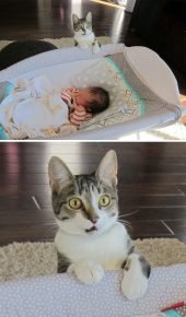 Кошка в первые увидела младенца