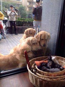 Котята и собаки впервые увидели друг друга
