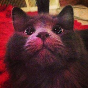 Кошка впервые видит новогоднюю ёлку