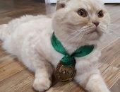 Житель Перми шутки ради выставил на продажу усы своих котов