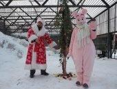 Все было по-настоящему: дед Мороз, елка, символ наступающего года