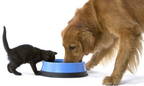 Собака и кошка едят
