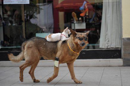 Собака и кошка гуляют