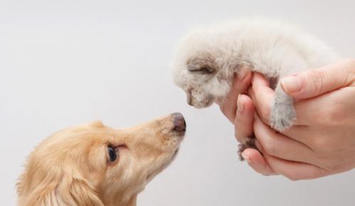 Собака обнюхивает котёнка