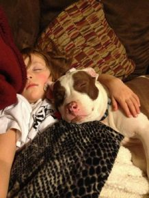 Питбуль спит с девочкой