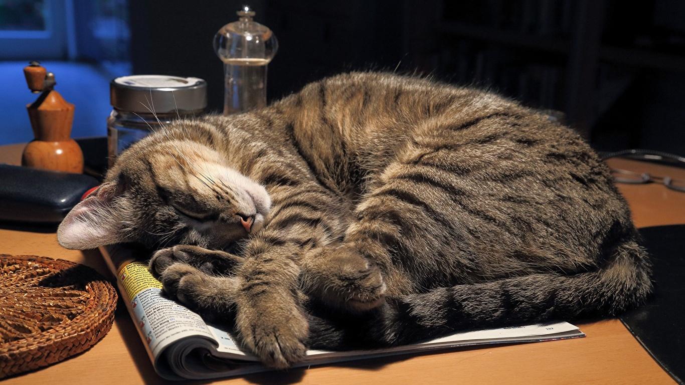 Где любят спать кошки