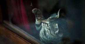 Кот играет с пчелой