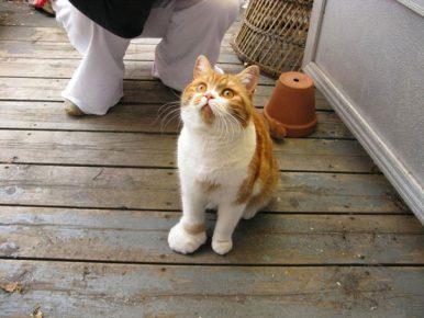 Лапа кота после игры с пчелой