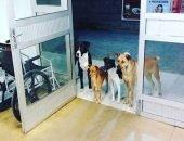 Уличные собаки ждали своего бездомного хозяина возле больницы