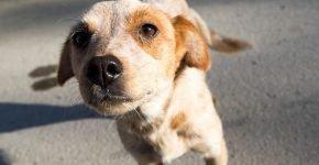 Житель Баку не пожалел своей дачи на благо спасение искалеченных собак