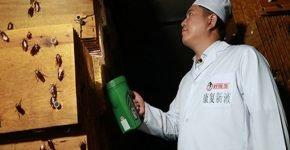 Бизнес с Китаем: тараканы в обороте