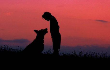 Девочка и собака на фоне заката