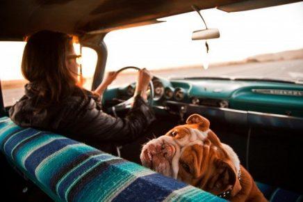 Женщина и собака в машине
