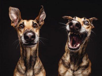 Две смешные морды собаки