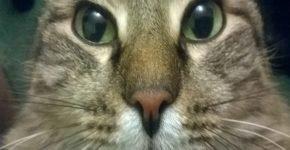Кот по ошибке хозяйки проехал полстраны в коробке