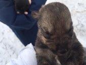 В Татарстане щенков выбросили в реку как ненужный мусор