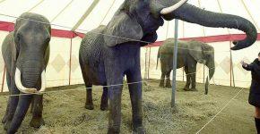 В Нью-Джерси запретили цирки «на колёсах» с дикими животными