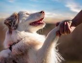 Человек жмёт лапу собаке