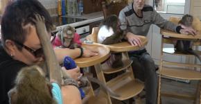 Супруги из Калужской области заботятся о шестерых макаках