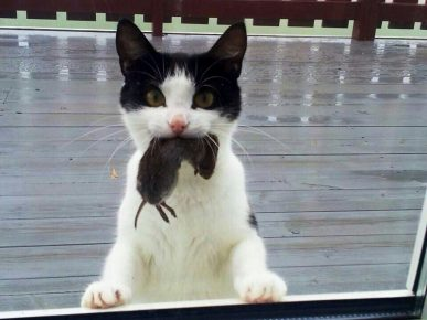 Котик с мышью в зубах
