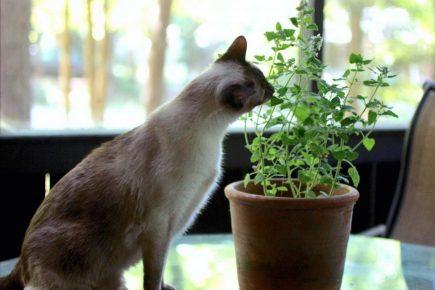 Кот ест комнатный цветок