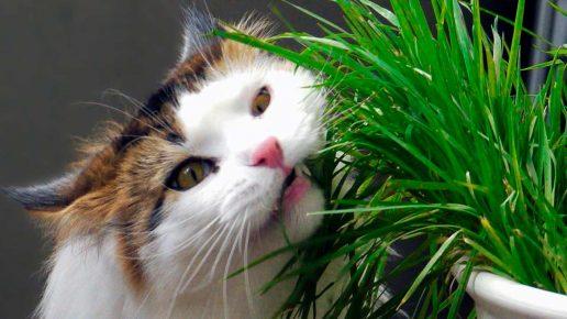 Кошка ест комнатное растение