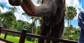Воровство наказуемо: слон не смог перелезть через запор фермера и умер