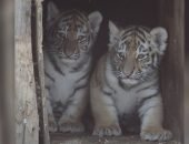 В пермском зоопарке полосатое пополнение