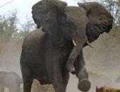 Слон затоптал одного из смотрителей в парке ЮАР