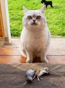 Кот и две мыши