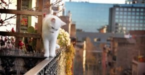Белая кошка на балконе