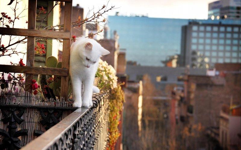 Кошка упала с большой высоты – что делать