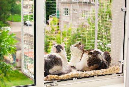 Две кошки в вольере «Антикошка»