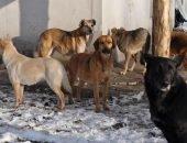 Спустя восемь лет принят закон «Об ответственном обращении с животными»