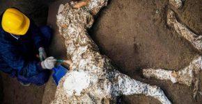 Открытие Помпеи: археологи откапали окаменевшие останки лошадей