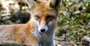 В Сочи проведут массовую вакцинацию диких зверей