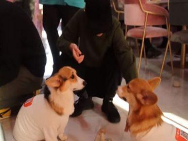 Собаки в кафе