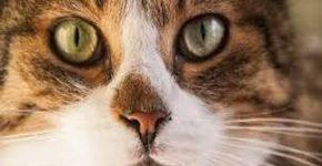 Как будет работать закон о домашних животных