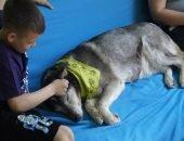 Акция помощи собакам-терапевтам помогла собрать 300 тыс. рублей
