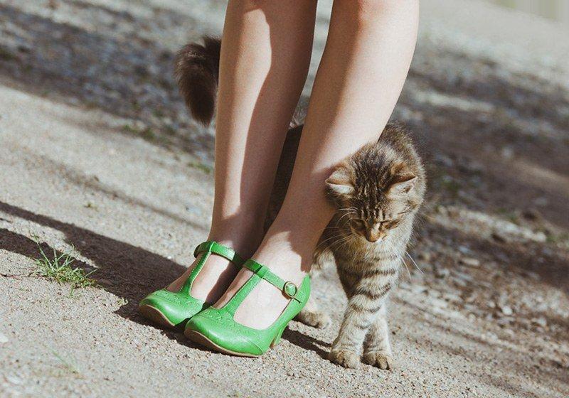 кошка трётся мордой о ноги человека