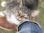 кошка трется о ногу хозяина